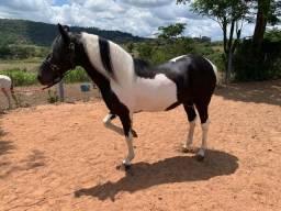 Cavalo Manga Larga Pampa