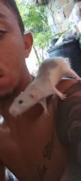 Ratinho Twister