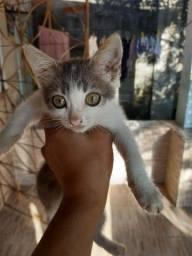 Doaçao de gato filhote