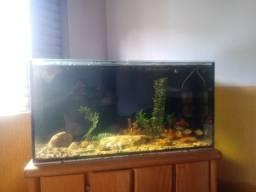 Vendo aquário samp completo com tods os acessórios.