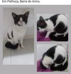 Douo 2 gatos resgatados (abandono)
