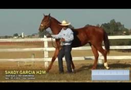 Cavalo puro e documentado