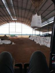 Fasenda 44 mil equitares soja