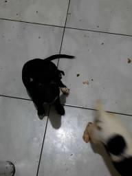 Doa-se filhotinhos de cachorro!!