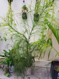 Mudas de planta