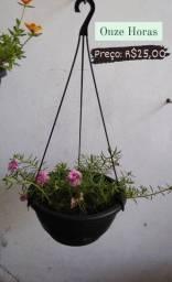Plantas de preços variados