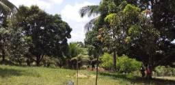Vendo sítio em Laranjeiras não tem casa 35000