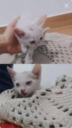 Doação gatinho filhote