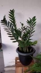 Vendo plantas
