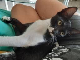Gato Filhote para Adoção em Lauro de Freitas