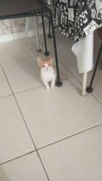 Doasse gato macho