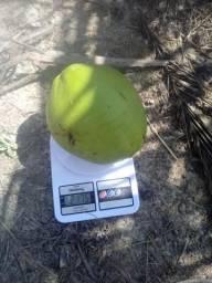 Coco Verde do Nordeste