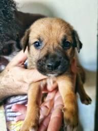 Filhotes de cachorros para adoção