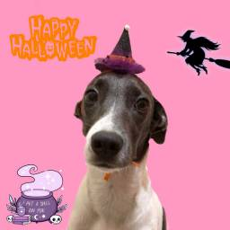 Pet VIBE - Halloween, bandanas e acessórios