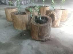 Adubo orgânico e jarros naturais.