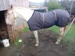 Égua boa de laço
