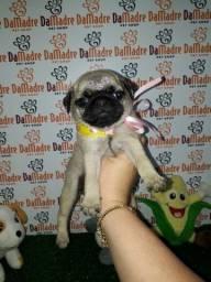Pug é no Da Madre Pet Shop