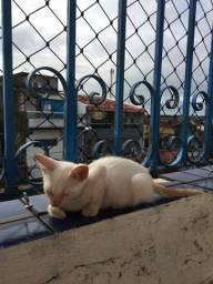 gatinho branco para a doação