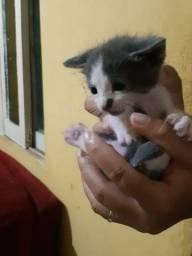 Doação de gato urgente