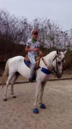 Cavalo de campo