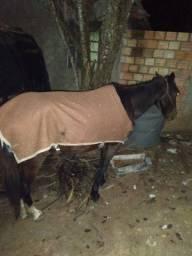Cavalos de carroça