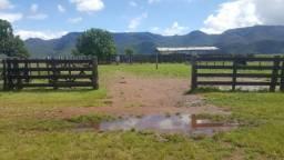 Fazenda 440 hectares, em jangada