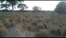 FAZENDA 112 ALQUEIRES 9 KM  BR 242. FORMOSO DO ARAGUAIA.