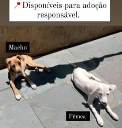 Doação de filhotes de cachorro - Entregamos
