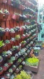 Suculentas, roseiras e outras plantas.