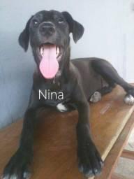 Nina - Adoção