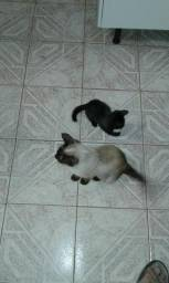 Filhote de gata seames doação.