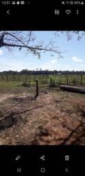 Fazenda para preservacao ambiental