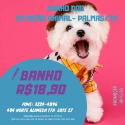 Banho Dog