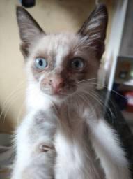 Eu estou doando esse gatinho