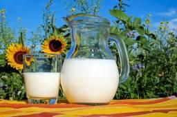 Exame em ruminantes leiteiras e corte
