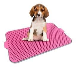 Pinico para cachorro azul e rosa