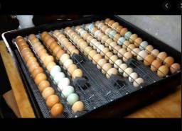 1.100,00 Chocadeira automática Dove 126 ovos