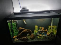 Aquario 90 litros completo