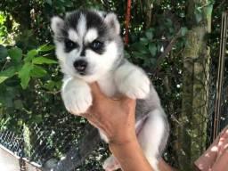 Estamos vendendo husky