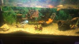 Vendo aquário USADO