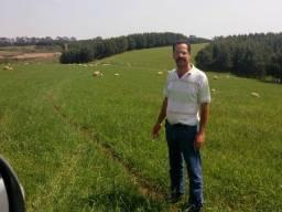 Consultoria e Assistência técnica em ovinocultura e caprinocultura