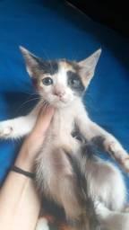 Gatos para adoção responsável URGENTE