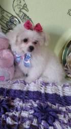 Poodle micro toy zero