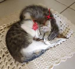 Doação de uma gatinha linda