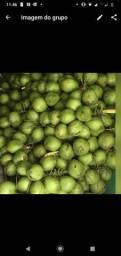 Coco verde 130 o centro