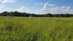Fazenda 186 hectares matogrosso sul NÃO ACEITA TROCA SOMENTE VENDA DINHEIRO