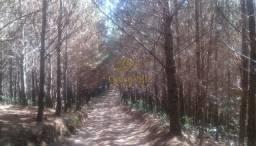 Campo Largo 123 Alqueires - 298 Hectares - Reflorestamento