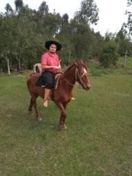 Vendo cavalo encalhado