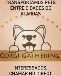 Transportamos Pets entre cidades de Alagoas
