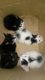 Filhotes de gato resgatado para doação.